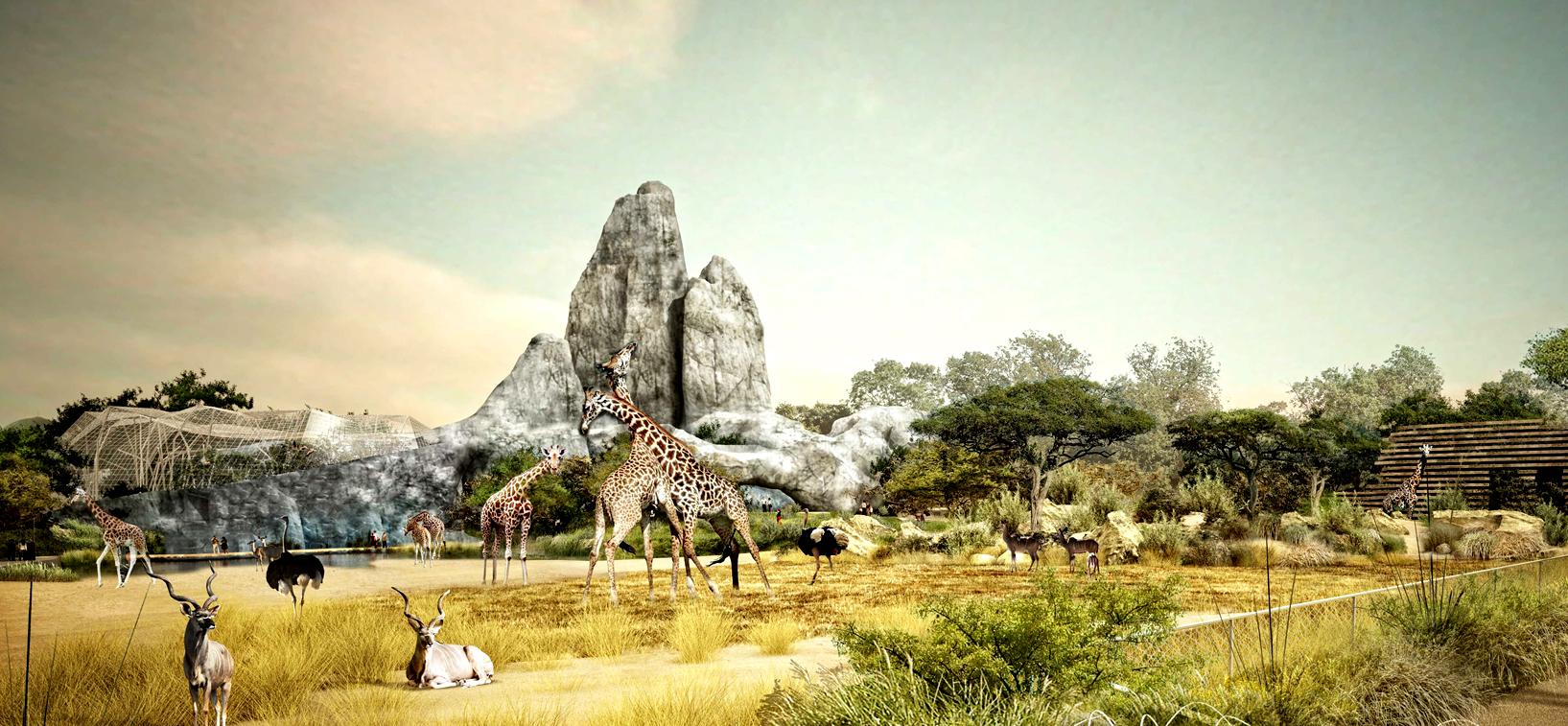 Mnhn-Girafes-Nouveau-zoo-de-Vincennes-©-BTUA-AJOA