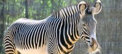 zoo-vincennes-parrainages-25_4531124
